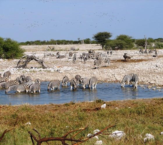 Dieren spotten in Namibië